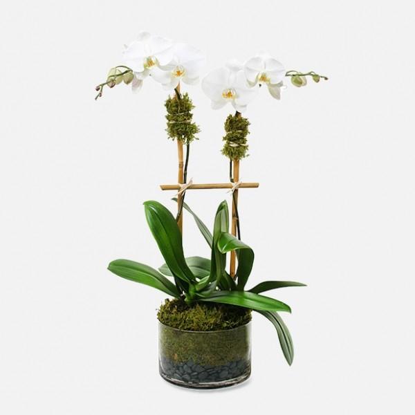 Abbott Florist Orchid